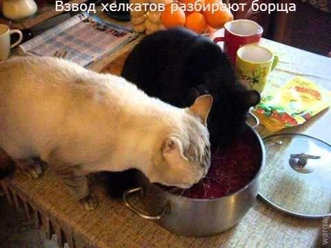 hellcat aus waffentrager borsig